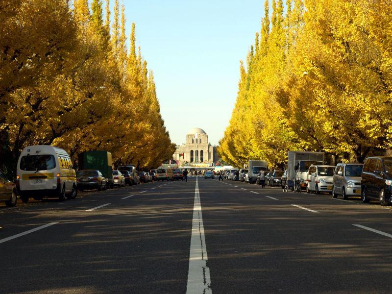 这条美丽的黄金大道从大正12年(西元1923年)开始种植,如今已有超过150